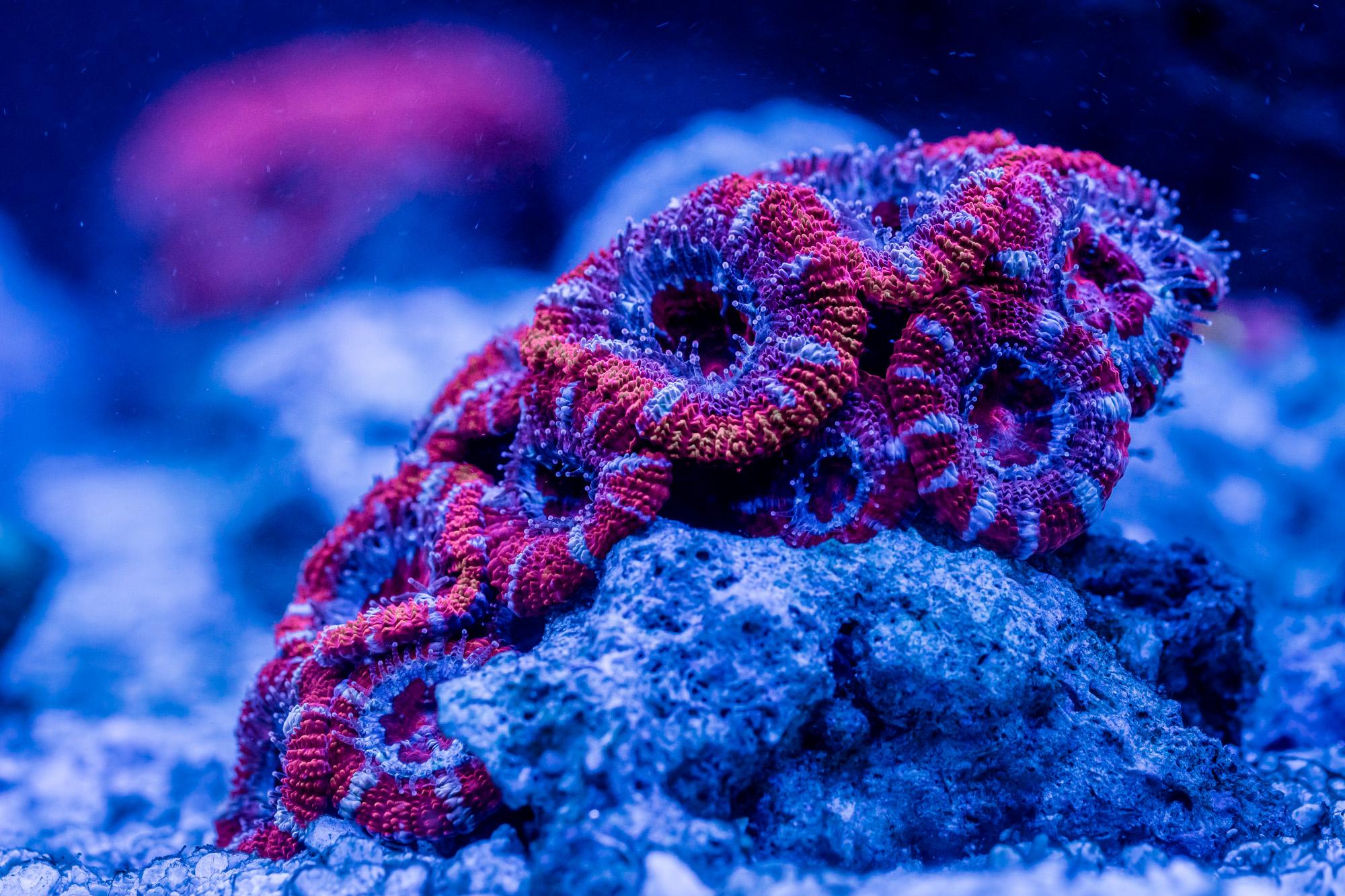 korallen-cube-1.jpg