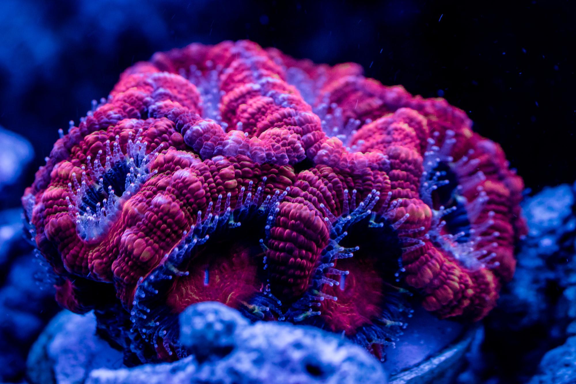 korallen-cube-2.jpg