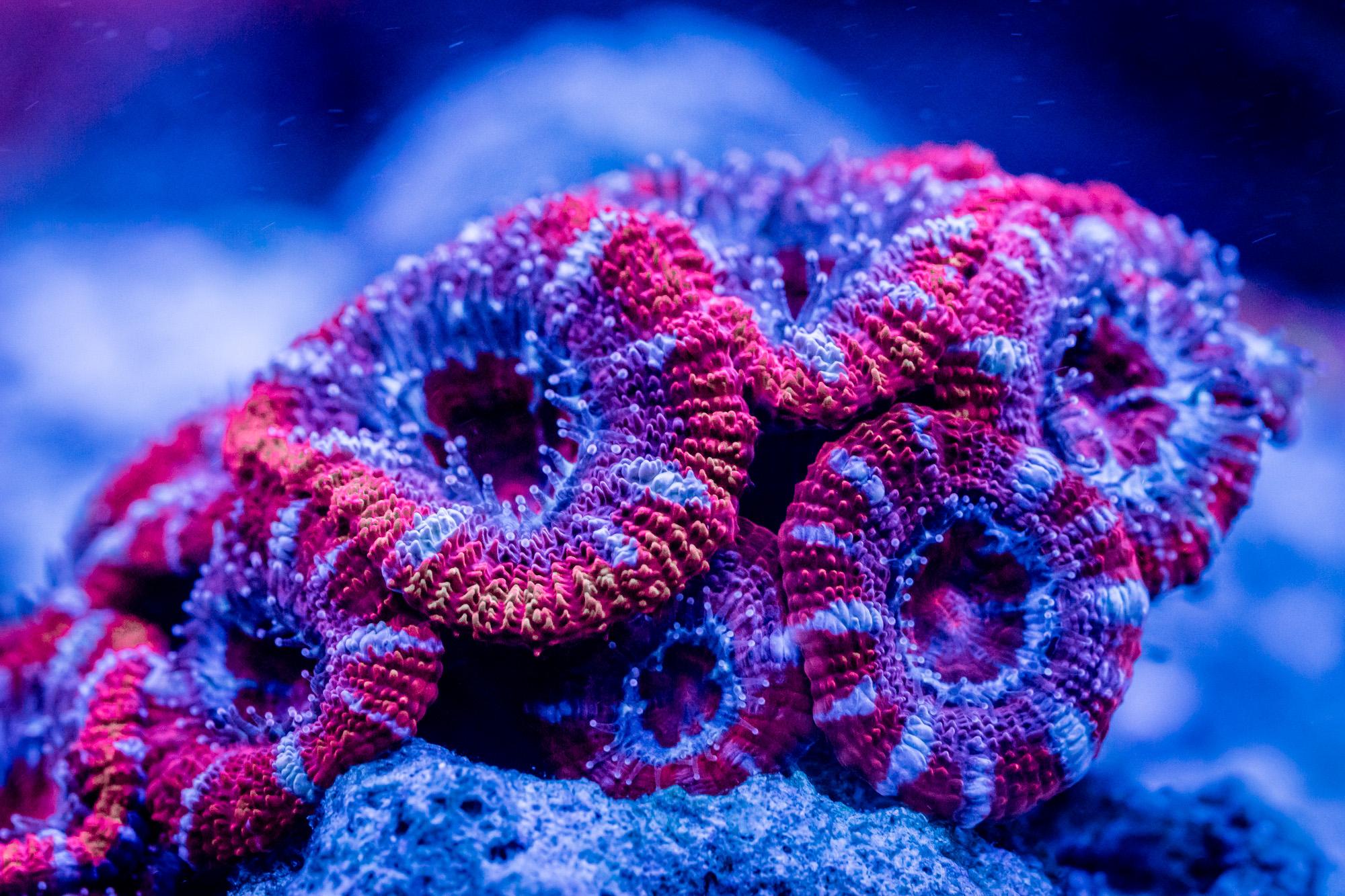 korallen-cube-3.jpg