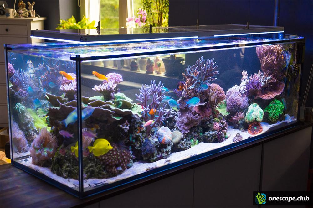 Ein 400l raumteiler 150x50x50cm seite 9 aquarium for Salzwasser aquarium