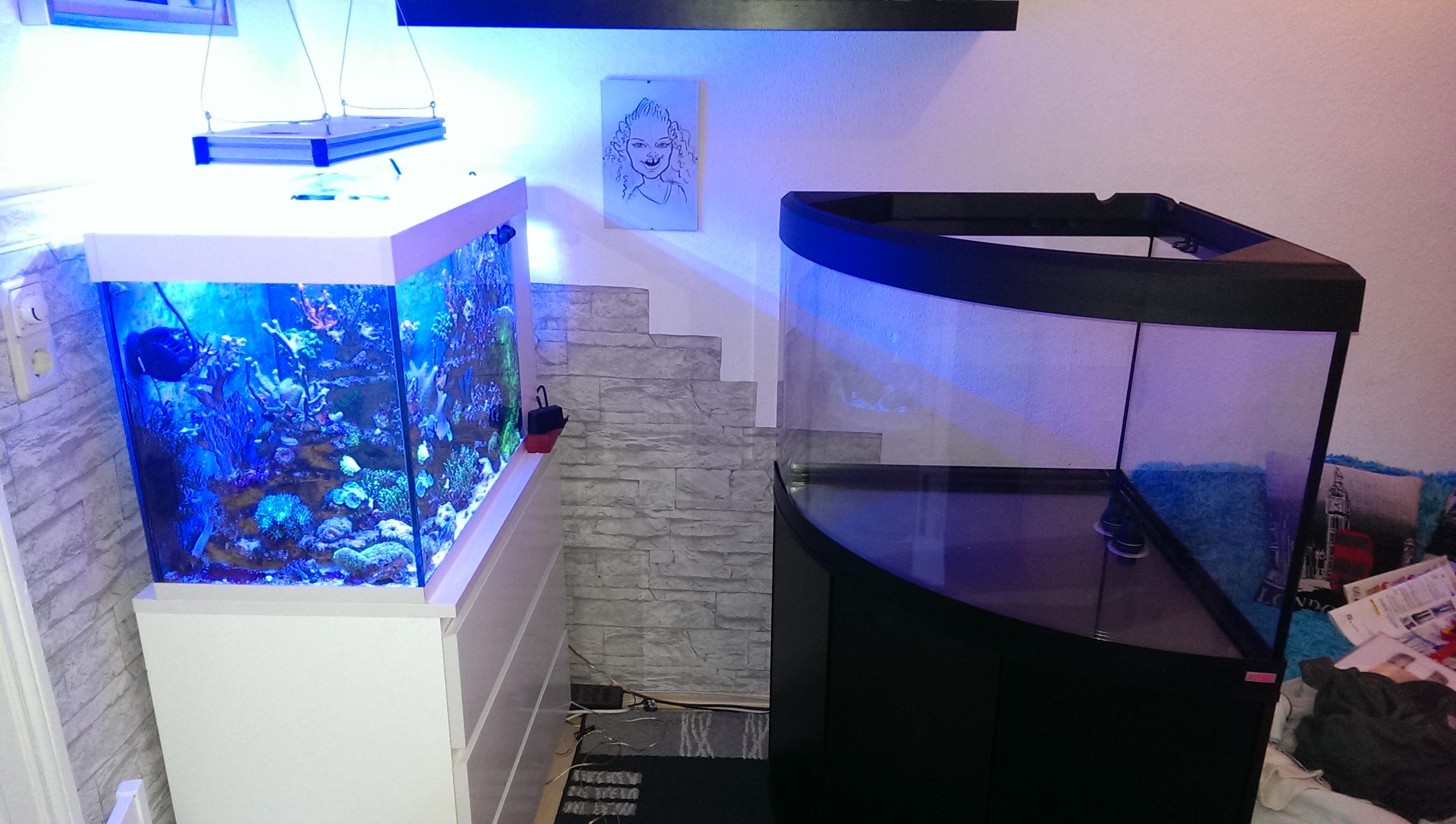 fluval venezia eckbecken meerwasser aquarium vorstellung reeftanks dein forum f r. Black Bedroom Furniture Sets. Home Design Ideas