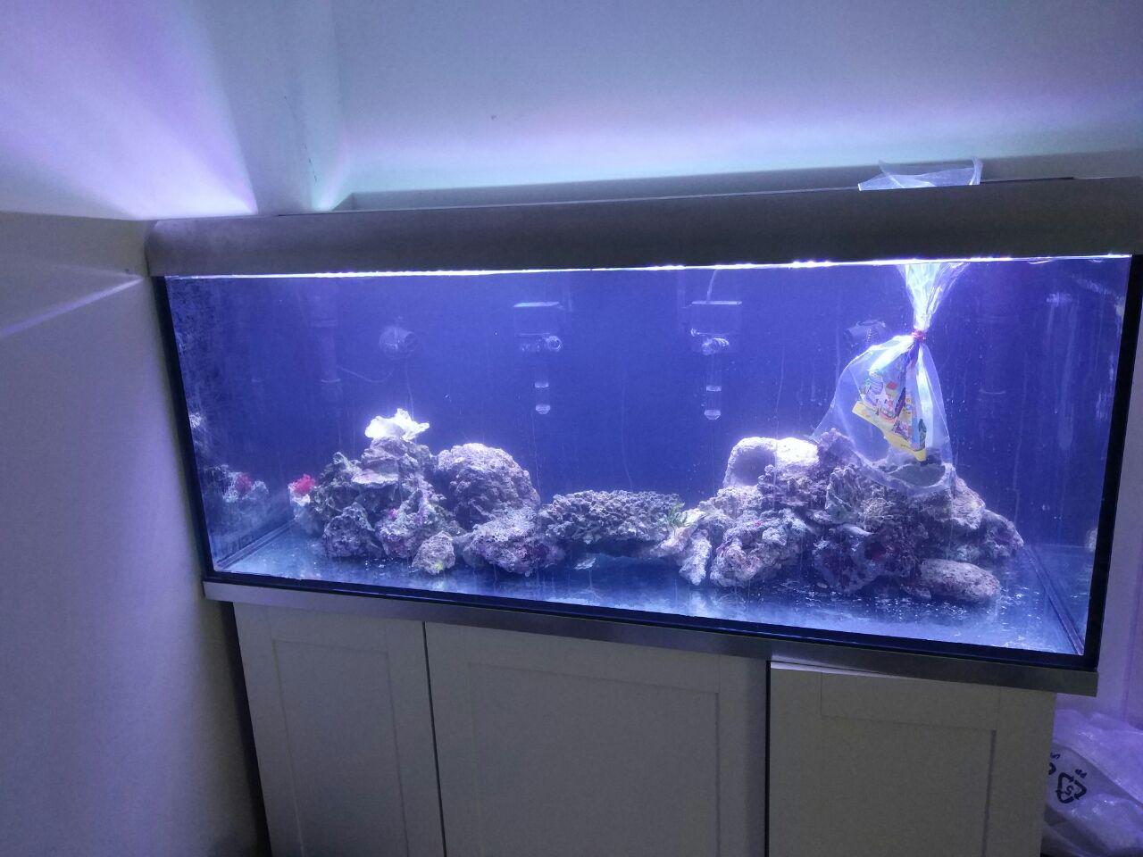 meerwasser fische privat kaufen