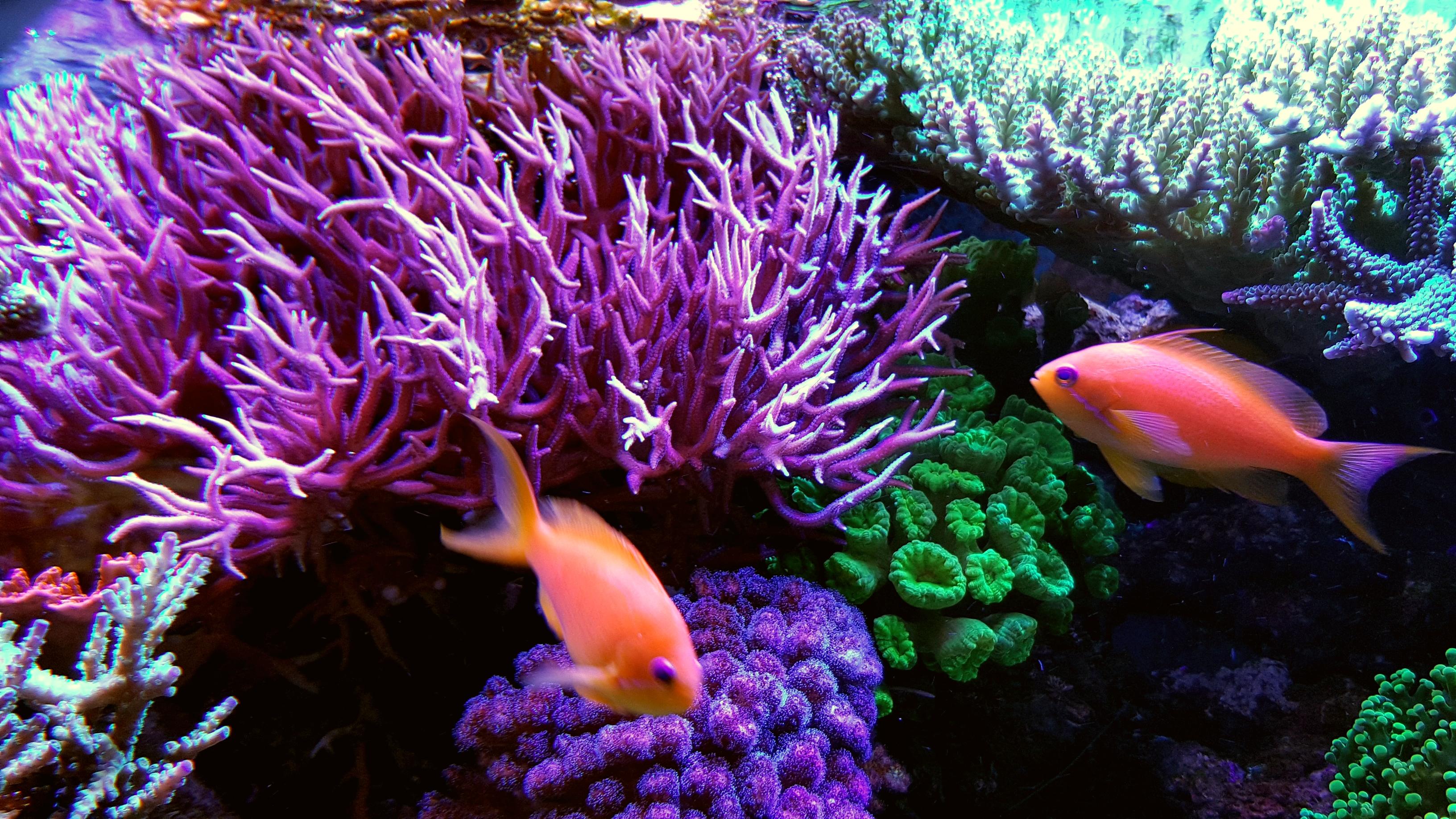 mein erstes kleines riff aquarium vorstellung reeftanks dein forum f r meerwasser und. Black Bedroom Furniture Sets. Home Design Ideas